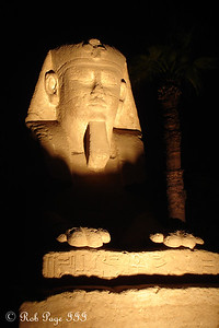 One of the sphinxes at the Luxor Temple - Luxor, Egypt ... November 24, 2006 ... Photo by Rob Page III