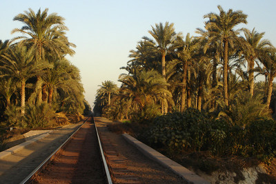 The train cuts through the trees along the Nile - Dashur, Egypt ... November 28, 2006 ... Photo by Rob Page III