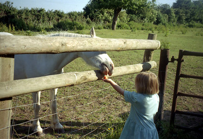 Sue's little girl feeding a horse. ... June 19, 2001