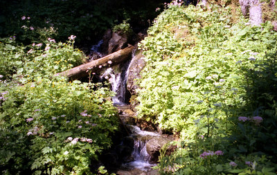 A mountains stream near Murren, Switzerland. ... July 4, 2001 ... Photo by Rob Page III