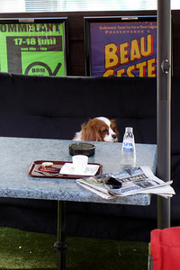 A breakfast fit for the dog - Antwerpen, Belgium ... June 18, 2006 ... Photo by Rob Page III