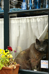 A sad old cat hanging out in a window - Zaanse Schans, Netherlands ... June 16, 2006 ... Photo by Rob Page III