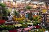 Amsterdam Flower District