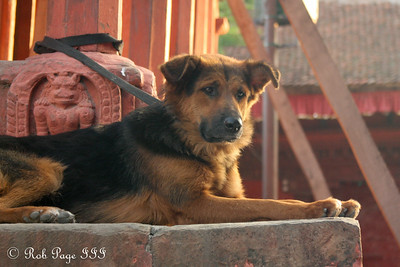 A dog looks out at Durbar Square - Kathmandu, Nepal ... May 29, 2014 ... Photo by Rob Page III