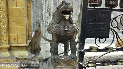 A monkey at Swayambhunath, the monkey temple - Kathmandu, Nepal ... May 29, 2014 ... Photo by Rob Page III