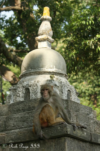 At Swayambhunath, the monkey temple - Kathmandu, Nepal ... May 29, 2014 ... Photo by Rob Page III