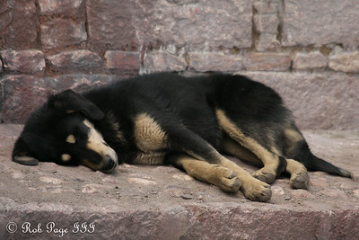 A dog at the Sakya Monastery - Shigatse, Tibet, China ... May 25, 2014 ... Photo by Rob Page III