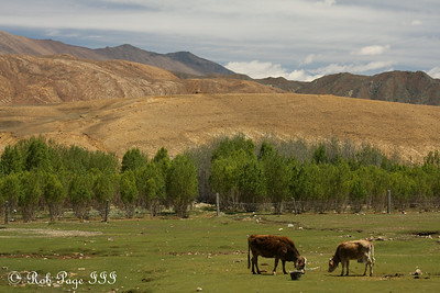 Farming near the 5000 km marker along National Route 318 - Shigatse, Tibet, China ... May 25, 2014 ... Photo by Rob Page III