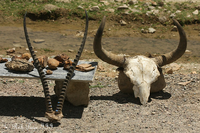 Skulls for sale along National Route 318 - Shigatse, Tibet, China ... May 25, 2014 ... Photo by Rob Page III