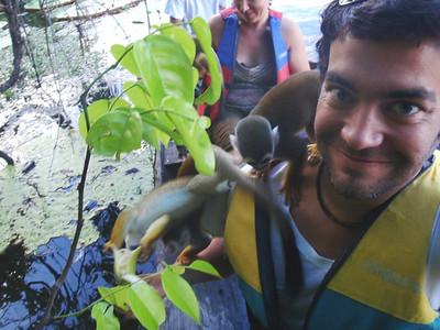 Its not a jungle myth, monkeys do love bananas.