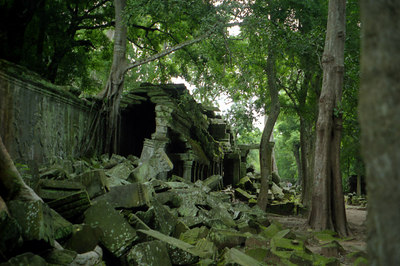 Ta Prohm.  Archeaologists have left this temple as it was when the European explorers discovered Angkor Wat.  The trees grow through and out of the ruins. ... August 15, 2004 ... Copyright Robert Page III