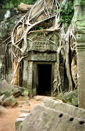 Cambodia - Ta Prohm