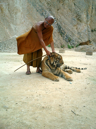 Thailand - Tiger Temple