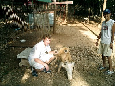 The tiger temple in Kanchanaburi near Bangkok, Thailand.  The monks at this temple take care of the tigers and other animals.  The monkey. ... August 18, 2004 ... Copyright Robert Page III