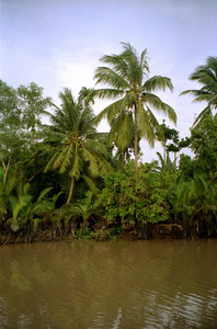 Palm trees lining one of the rivers in the Mekong Delta. ... August 13, 2004 ... Copyright Robert Page III