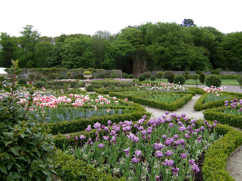 Muckross House Tulip Gardens