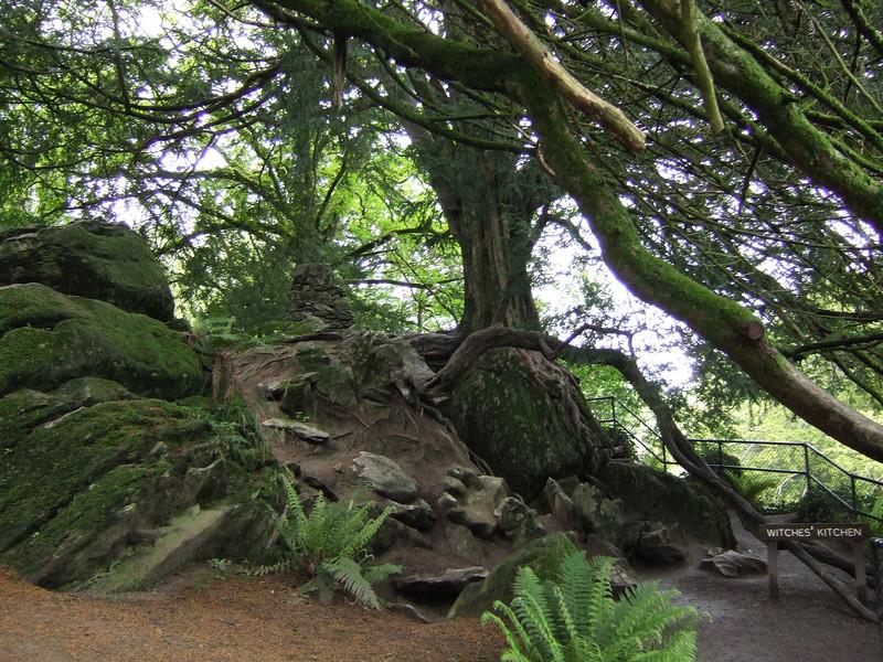 Blarney Castle Grounds