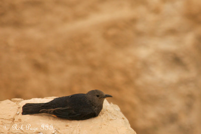 A bird taking in the view at the Masada - Masada National Park, Israel ... March 8, 2014 ... Photo by Rob Page III
