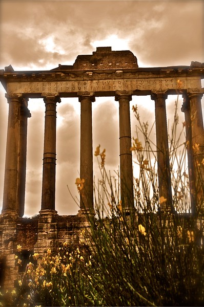 Wild Flowers at The Temple of Saturn
