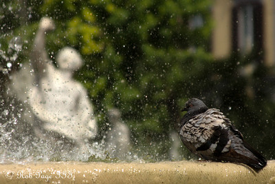 Enjoying the fountain - Naples, Italy ... May 25, 2013 ... Photo by Rob Page III