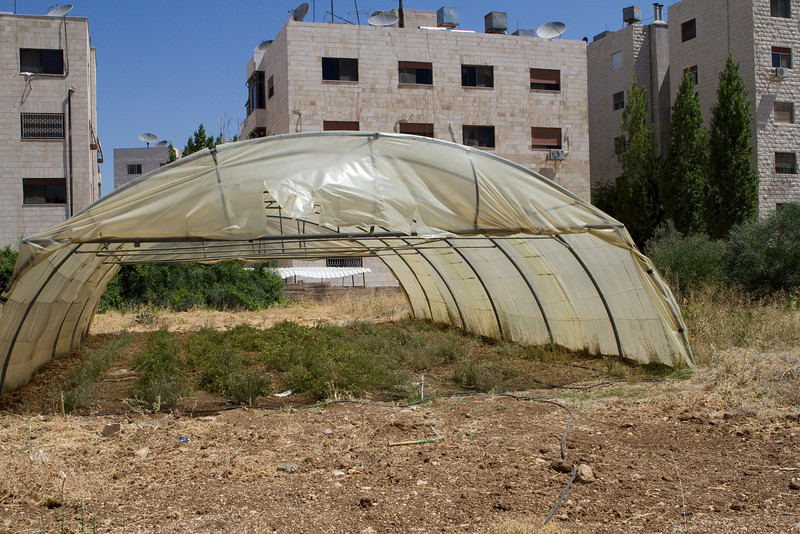 Income Generation Project: The school built a green house on their land to grow cherry tomatoes for sale in the community.