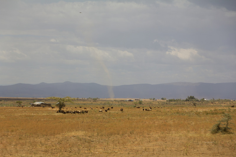 Dirt devils in the plains area between Masai Mara National Reserve and Nairobi - Kenya