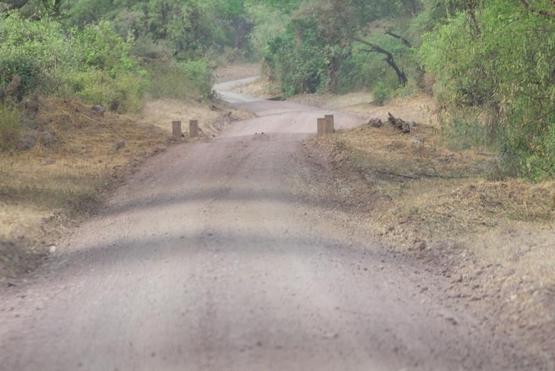 A safari road in the Lake Manyara National Park - Tanzania