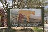 Billboard Tribute to the Lioness that raised an Impala as its own.