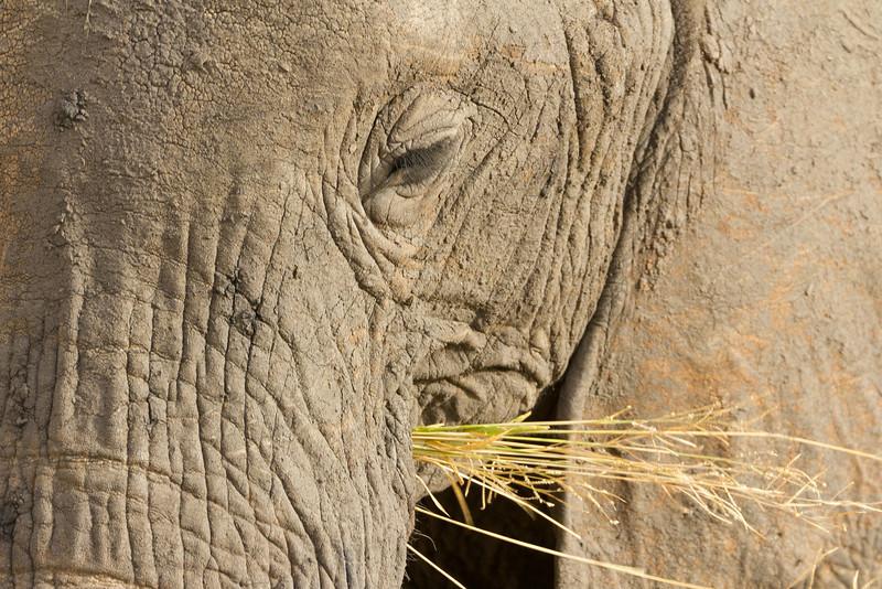 Eye of the beast in Tarangire National Park in Tanzania