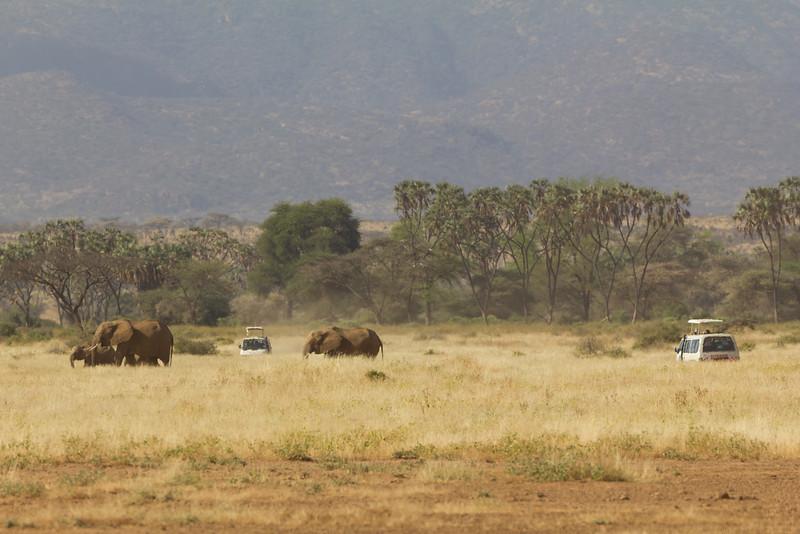Safari cars in the Samburu National Reserve - Kenya