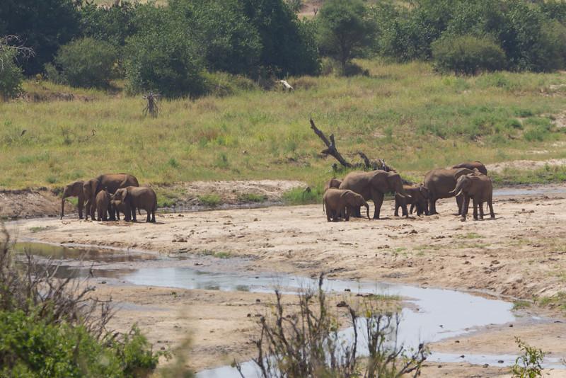 Elephants in the Tarangire National Park - Tanzania