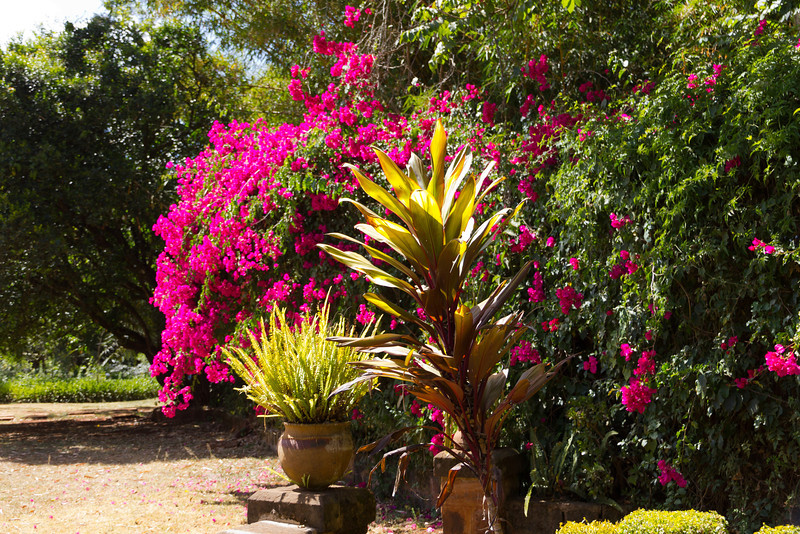 "Gardens at Karen Blixen's home. She wrote; ""Out of Africa""."
