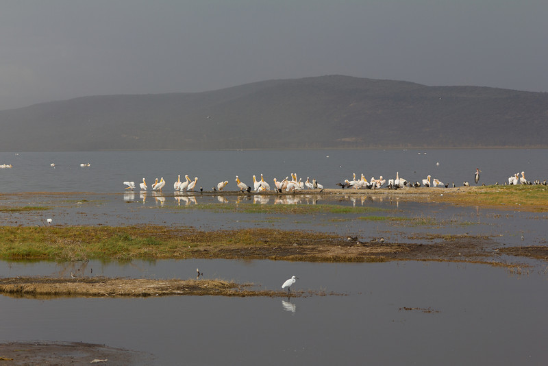 Flamingos at Lake Nakuru National Reserve - Kenya