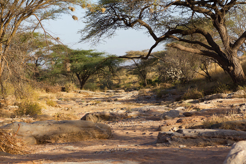 Dry season remains of a small river in the Samburu National Reserve - Kenya.