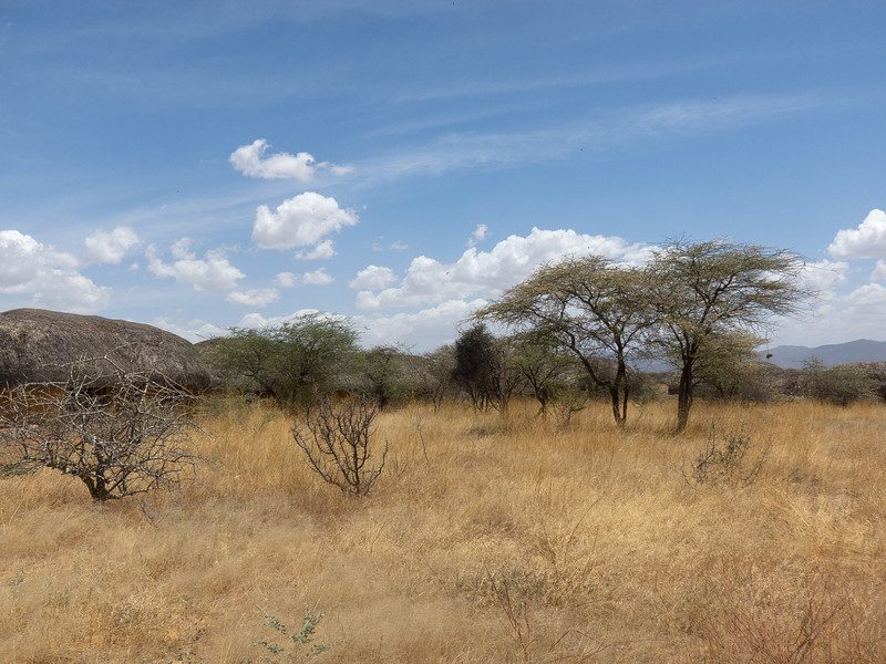 This is Samburu National Reserve  - Kenya