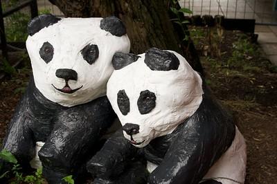 Pandas?