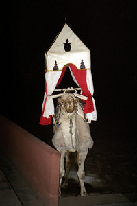 I wish the camals we rode looked like this - Marrakesh, Morocco ... March 7, 2005 ... Photo by Rob Page III