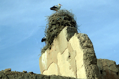 One of the storks of the El Badi Palace - Marrakesh, Morocco ... March 7, 2005 ... Photo by Heather Page