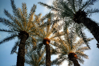 The Palm trees - Marrakesh, Morocco ... March 7, 2005 ... Photo by Rob Page III