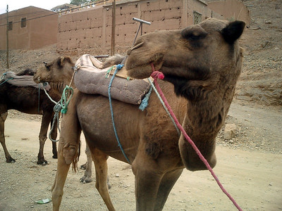 Our 'comfortable' ride - Zagora, Morocco ... March 9, 2005 ... Photo by Rob Page III