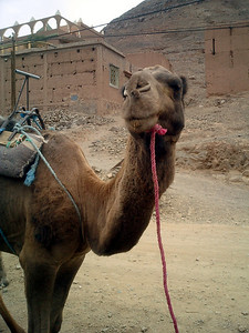 Our comfortable ride - Zagora, Morocco ... March 9, 2005 ... Photo by Rob Page III