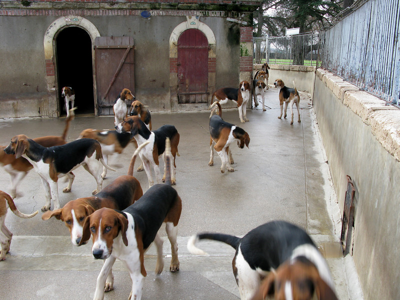 The Cheverny Hunting Dogs