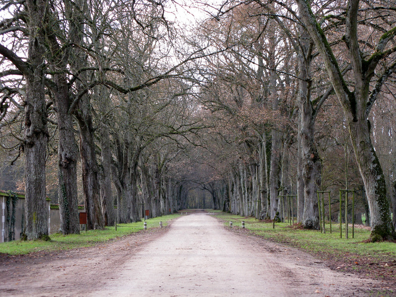 The road leading to the Chateau de Chenonceaux