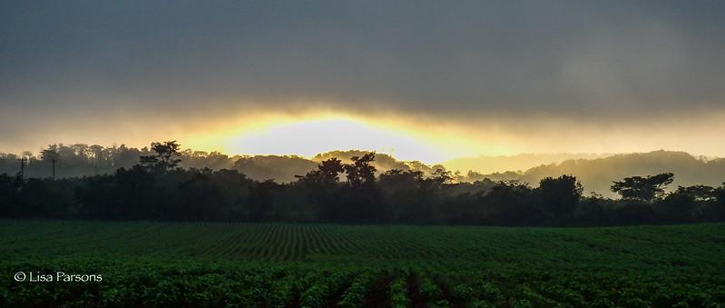 Fields Along the Long Road in Belize