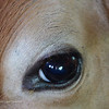 El Ojo Oscuro