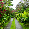 Flower Lined Pathway