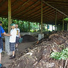 Compost in Various Stages
