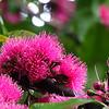 Las Flores Rosadas