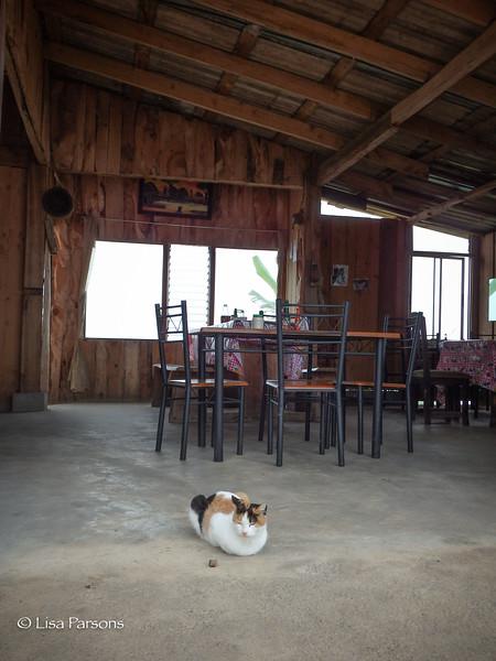 Cat at a Restaurant at the Mirador