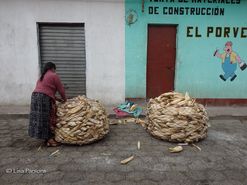 Maiz (corn)